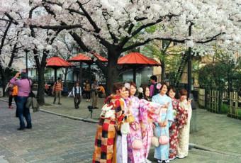 Explore a True Japanese Phenomenon when Cherry Blossoms Bloom in Kyoto