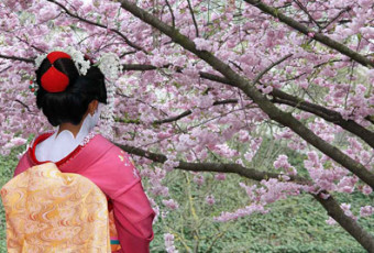 The Cherry Blossom Festival – A Tribute to Japanese Culture