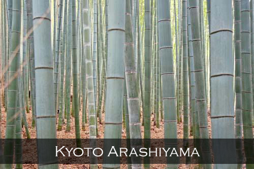 The famous bamboo groves in Arashiyama, ,makes a great background choice for wallpaper or desktop, Kyoto, Japan