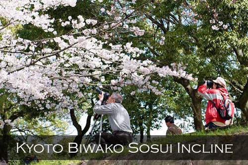 Two photographers take photos of the cherry blossoms along the Biwako Sosui Incline, Kyoto, Japan