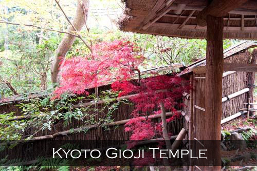 A red Japanese Maple in Gio Ji Temple, Kyoto, Japan