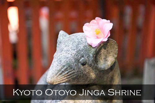 A stone rat statue holding a scroll, the rat has a pink flower behind its ear (possibly this is the rat assistant of Daikokuten or Daikoku who is known in Japan as the god of wealth, farmers, food, and good fortune). Otoyo Jinga Shrine, Kyoto, Japan