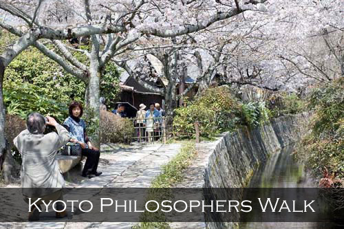 A husband takes a photograph of his wife under a ceiling of cherry blossom trees that line the Biwako Canal. Philosopher's Walk Path, Kyoto, Japan
