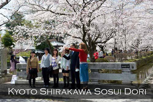The Biwako Canal lined with full bloom cherry blossoms is a nice background for a group of Japanese visitors to get their photographs taken. Shirakawa Sosui Dori, Kyoto, Japan