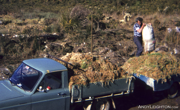 If close to a vehicle sometimes the Sphagnum Moss is brought out of the swamp by hand. Marsden, Westland, New Zealand. John Leighton