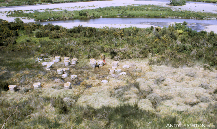 A high view of a sphagnum moss swamp that one half has been picked into bales and the other half prepared for picking with the covering vegetation removed. Marsden, Westland, New Zealand. 'Skye' (dog in centre)