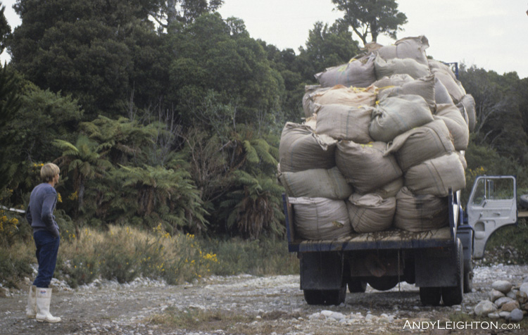 A fully loaded truck of sphagnum moss bales being tipped onto the ground for later drying and cleaning. Marsden, Westland, New Zealand. Chris Leighton
